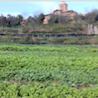 La Ortiga: biological agriculture in Barcelona's mountainous hinterland